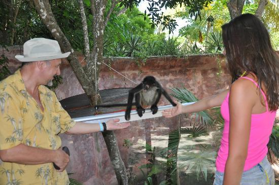 Hummer Jungle Tours: zoo