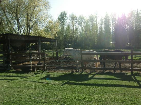 Half Moon Guest House: Horses