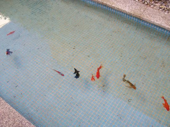 Hotel Santa Clara: Peces en el estanque
