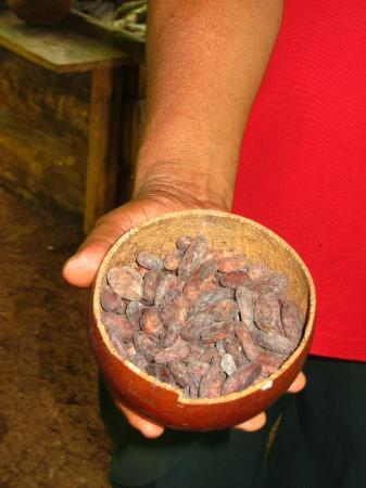 Oreba Chocolate Tour: Dried seeds.