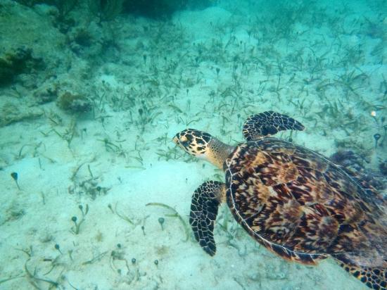 Aquamarine Beach Houses: Turtle