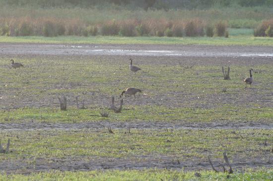 Huntley Meadows Park: Dry marsh, waiting for rain. Huntley Meadows. Aug 4, 2012
