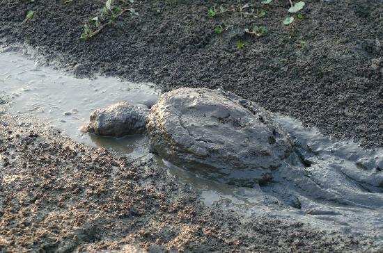 Huntley Meadows Park: Turtle crawling. Huntley Meadows. Aug 4, 2012