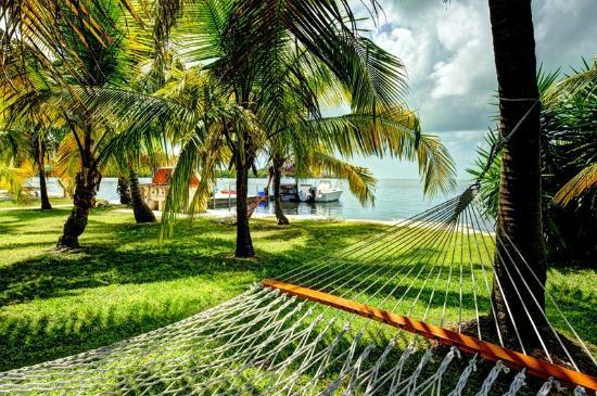 Gulf View Waterfront Resort: Comfortable Hammocks for relaxing.