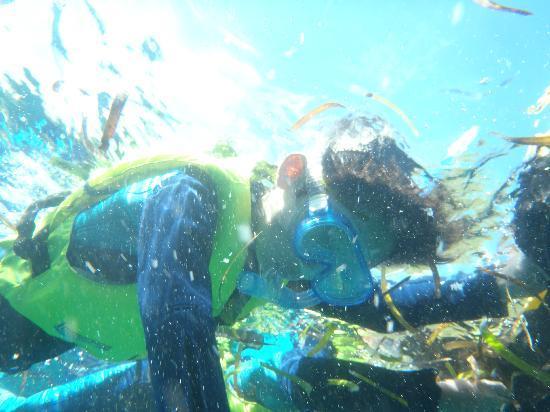 Misaki Diving: 息子、魚に餌やり中