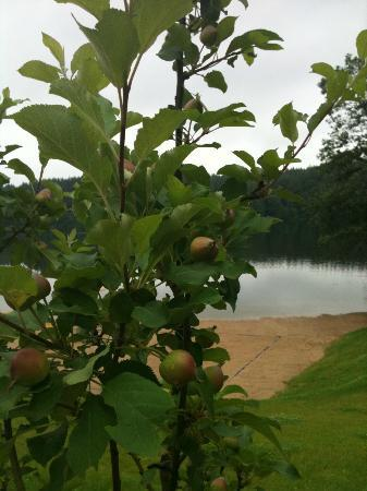 Esperanza Resort and SPA: Apple tree besides the beach