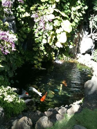 Sheraton Princess Kaiulani: Fish pond