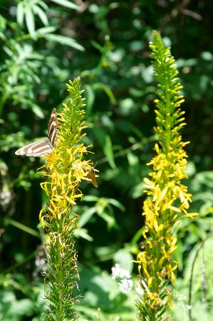 Liping Forest Park : Butterflies all around