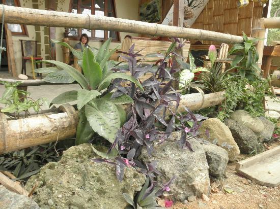 Monte Libano Hostal: Plantas y bamboo