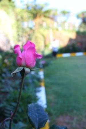 Lady Horton Bungalow : Garden