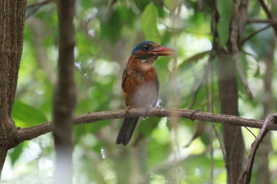 Lumbalumba Diving: Kingfisher