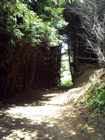 Howard Creek Ranch: One area of the H.C.R. splendid hiking trail.