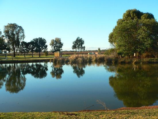 RACV Cobram Resort: Lakeside reflections