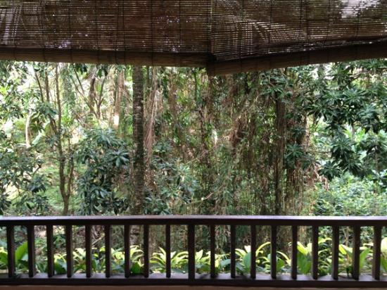 Jati 3 Bungalows: Forest View from Balcony (Family Deluxe Room on lower floor.