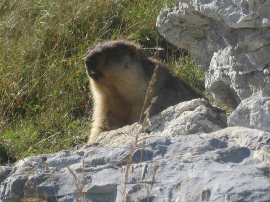 Marmot's Paradise (Marmottes Paradis): A Marmot