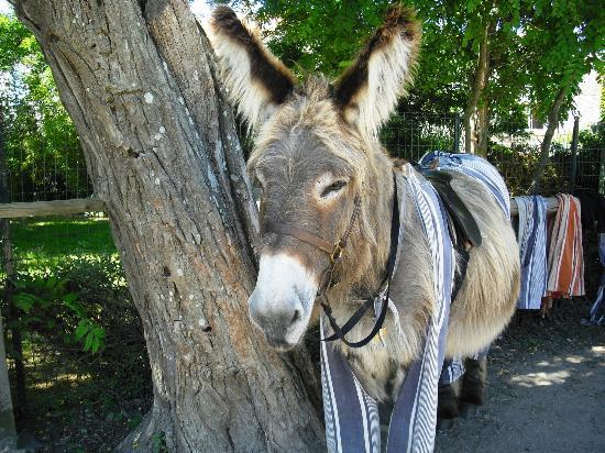 Locatlantique : French donkey