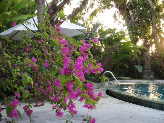 Fare Ti'i  (Villa Ti'i Bali): Beautiful flowers and plants