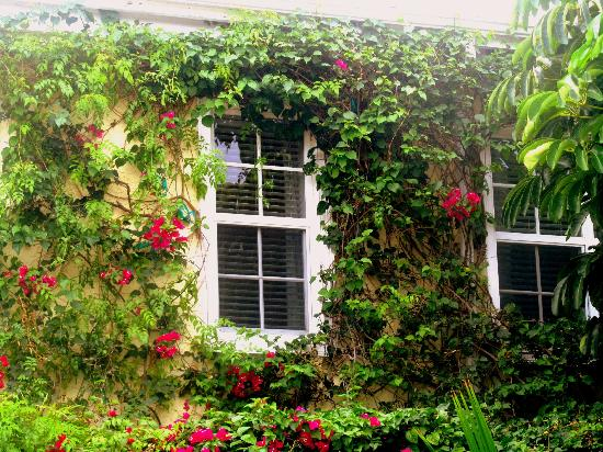 The Caribbean Court Boutique Hotel: Bougainvillea surround the walls