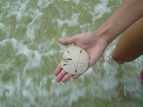 Sea Shell Tours