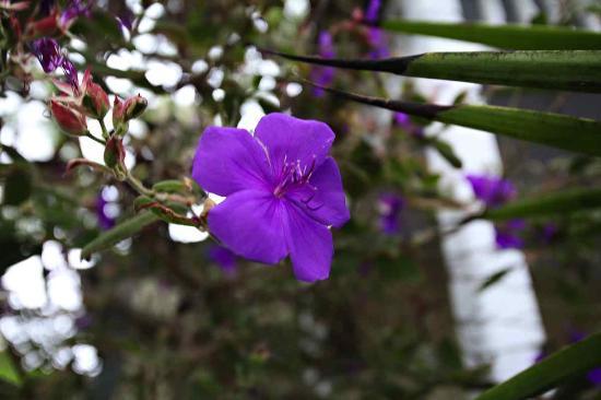 Keating House: Flower in the garden.