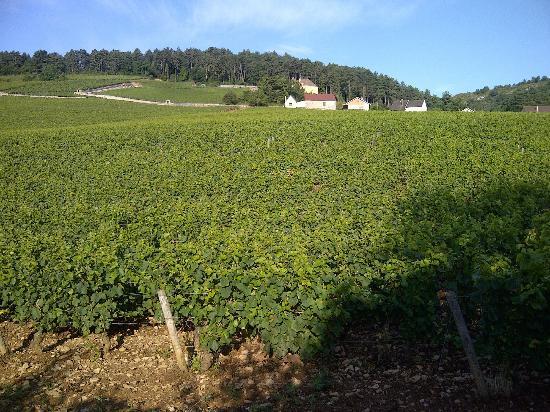 Chambres d'Hotes Saint Nicolas : St.Nicolas- Backyard view on vineyards.