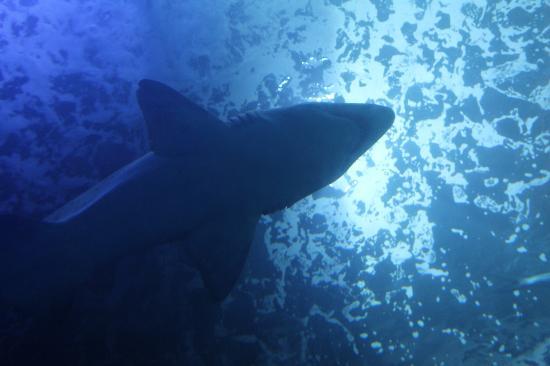National Marine Aquarium : Shark