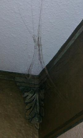 Comfort Inn Six Flags St. Louis : cobwebs in most corners at ceiling