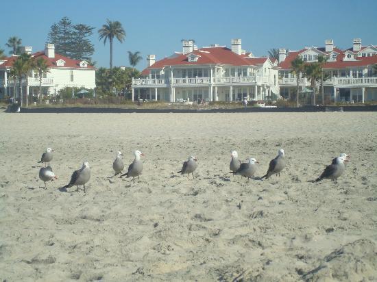 Hotel del Coronado: View of BV from ocean