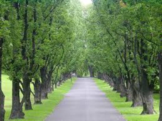 Botanical Gardens (Botanisk Hage og Museum) : Welcome