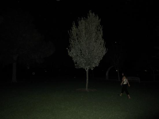 """Vegas Specialty Tours: haunted park with """"Orbs"""" which are NOT Ghosts"""