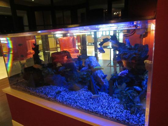 Falls Church Marriott Fairview Park: Fish in the lobby