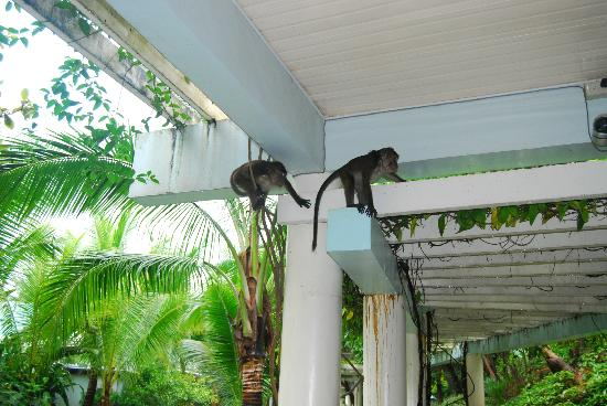 Camayan Beach Resort and Hotel : Somebody came to visit !