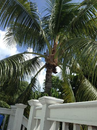 Wicker Guesthouse: The giant palm tree outside our room!