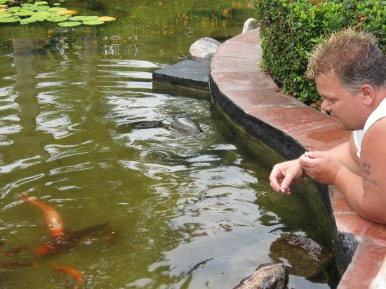 Casa Velas: Feeding the koi in the impeccably kept koi pools