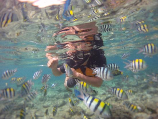 El Nido Resorts Lagen Island: School of Fish at El Nido Resorts Miniloc