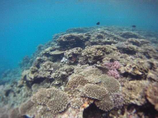 El Nido Resorts Lagen Island: Coral Reef