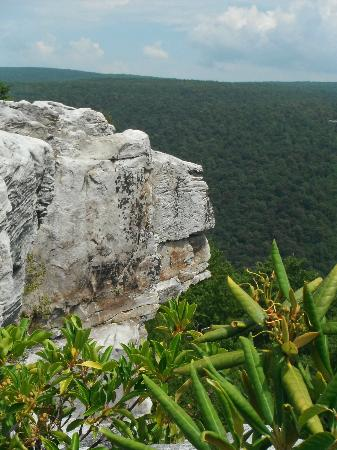 Dolly Sods Wilderness Area : Lion's Head