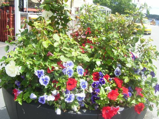 Hotell och Vandrarhem Zinkensdamm: beautiful flowers