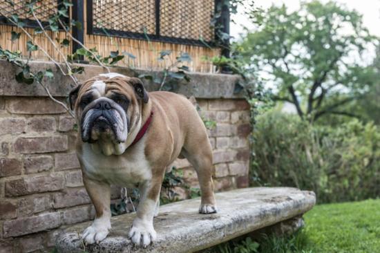 Villa Armena Relais : Franco, the mascot
