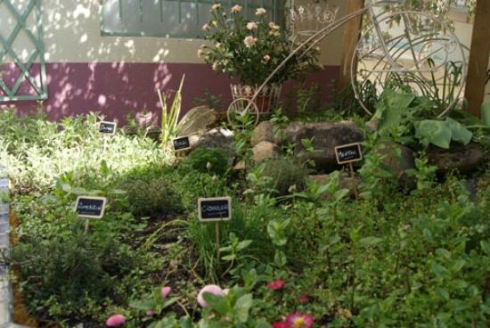 Mon jardin secret saint tienne restaurant avis num ro de t l phone photos tripadvisor - Deco jardin secret saint etienne ...
