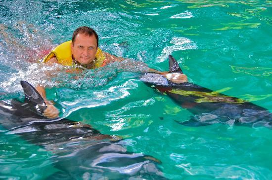 The Zala Villa Bali: SWIMING WITH DOLPHINS
