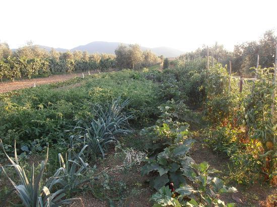 Agriturismo Al Vermigliano: esterni