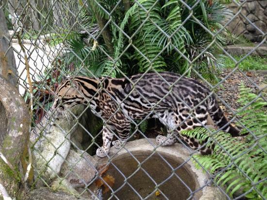 The Sanctuary Spa: Wild Cat