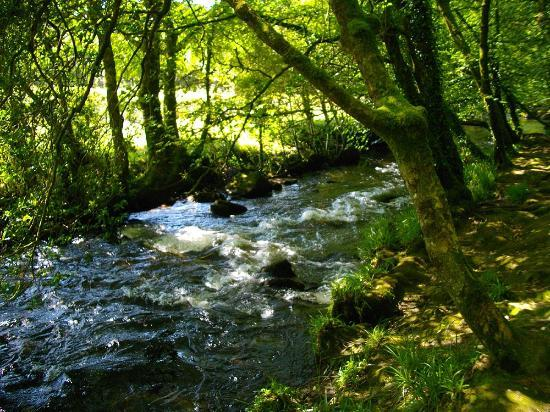 On the way to Golitha Falls