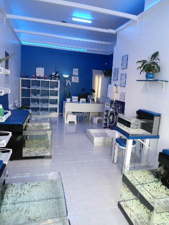 Fish Spa Boutique - Dr Fish