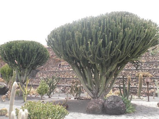 Preventivo generico eliminazione cactus Jardin-de-cactus