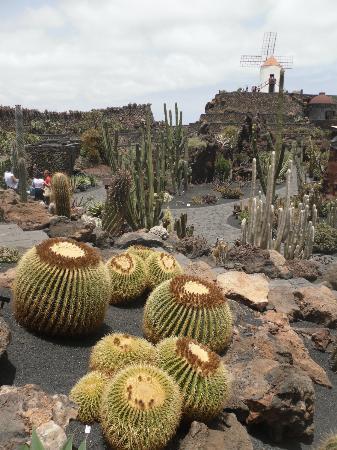 jardin de cactus vista generale