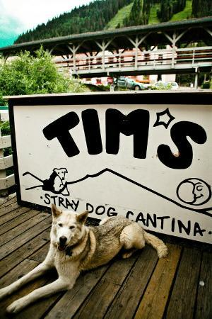 Tim's Stray Dog Cantina: Dog Friendly deck