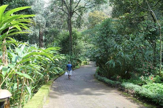 The Tall Trees Munnar: Pathway
