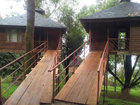 Nature Zone Resort: Tree House